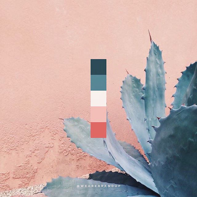 Exploring some new color palettes for our Brand Shop ⚡️ . . What is our Brand Shop? They are our way of offering you gorgeous branding at a fraction of working with us 1:1. Once you select a brand logo, we'll give you access to our library of color palettes to further customize your new look. . . Check out our Brand Shop (link in bio) if you're looking to build a gorgeous brand without breaking the bank. Page is in beta, so we're offering 20% off until the full shop launches! And new styles are dropping every couple of weeks 💥 Get in on the DM's if you have any questions!