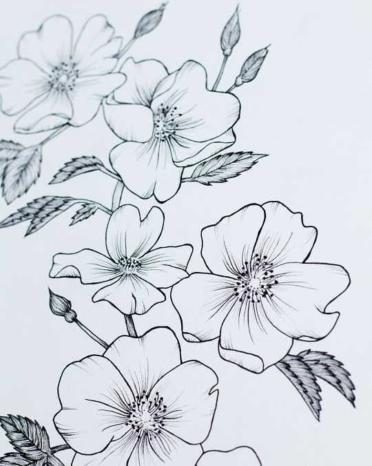 Do you like inked or pencil florals better?  I like both! I think there's something beautiful about the crisp black on white, yet there's something delicate and soft about just pencils with delicate pedals. What flowers would you like to see next?  @micronart pens @arches.art paper  #instadrawing #linedrawing #mybeautifulmess #handsandhustle #iloveart #fineliner #artmagazine #artofdrawingg #floralart #inthestudio #makersvillage #artist_sharing #simpleandpure #minimalart #pensketch #livecreatively #carveouttimeforart #spotlightonartists #proartists #instapainting #illustrationgram #botanicalillustration #floralillustration #botanicalpainting #botanicalartist #floralsyourway #botanicallinedrawing #floralarthub #plantdrawing #floraldrawing