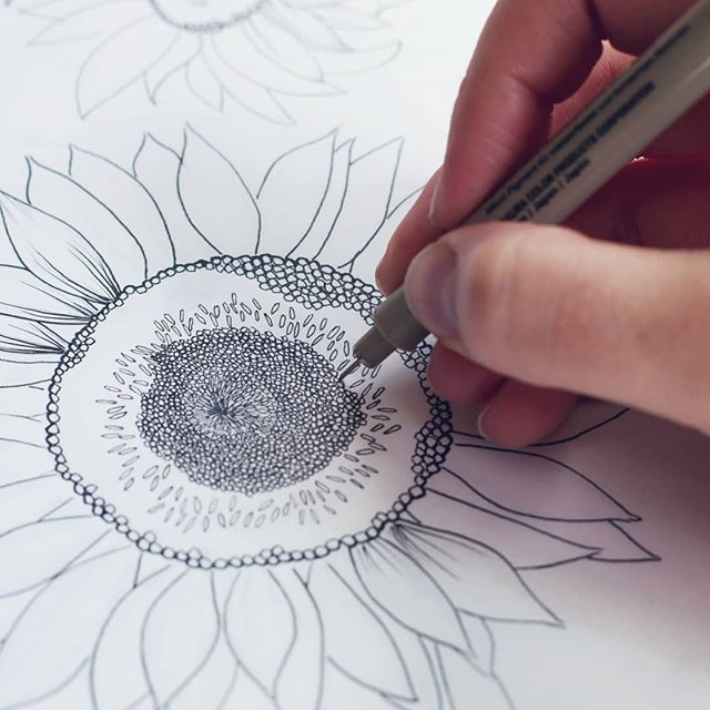What's something tedious that you did recently?  Drawing the center of sunflowers and such a tedious job. I want to draw some late summer flowers and just pretend that it's not turning to fall here in Seattle.  Since the inner part of the flower is tedious, but not hard to draw I've been filling in the center as I watch #brandplusbrand videos with @jennarainey & @iamjulieturkel and then stopping to write notes as needed.  Maybe I'll license some sunflowers one day!  Definitely keep checking back to my Instagram as I am super motivated to start getting more of my portfolio in order. I'll be posting sketchbook peaks, finish artwork, And also let you in on some tips and tricks.  #creativeentrepeneur  #artistshouts #pnwartist #freelanceillustrator  #lineartist  #seattleartists  #drawadot #CAFFEINATEANDCONQUER #wipart #blickartmaterials #artstrending #womenwhopaint #archespaper #artforhome #Smallartist #artists_magazine #womenwhodraw #supportlocalart #illustrationgram #botanicalillustration #floralillustration #botanicalpainting #botanicalartist #floralsyourway #botanicallinedrawing #botanicalwatercolor #floralarthub #plantdrawing #floraldrawing