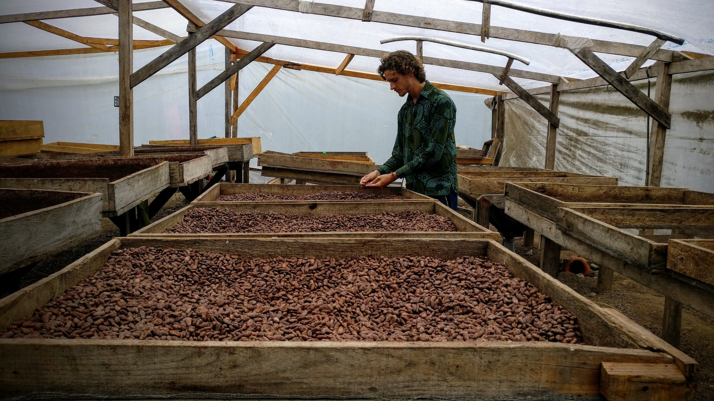 The cacao is laid out at drying decks after fermentation.
