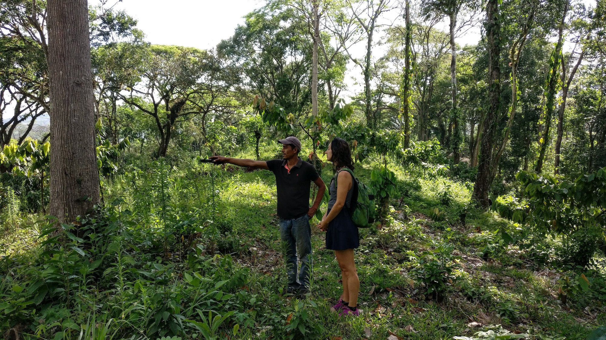 The cacao farm is like a forest with high biodiversity.