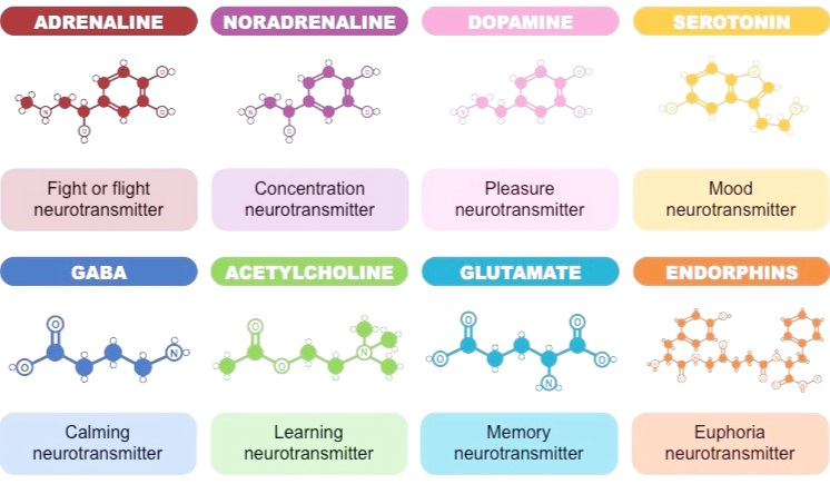 Check out this overview of major classes of neurotransmitters from BioNinja.