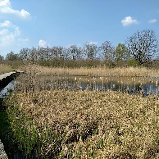 Beekbergerwoud ( Oerbos) Maart.