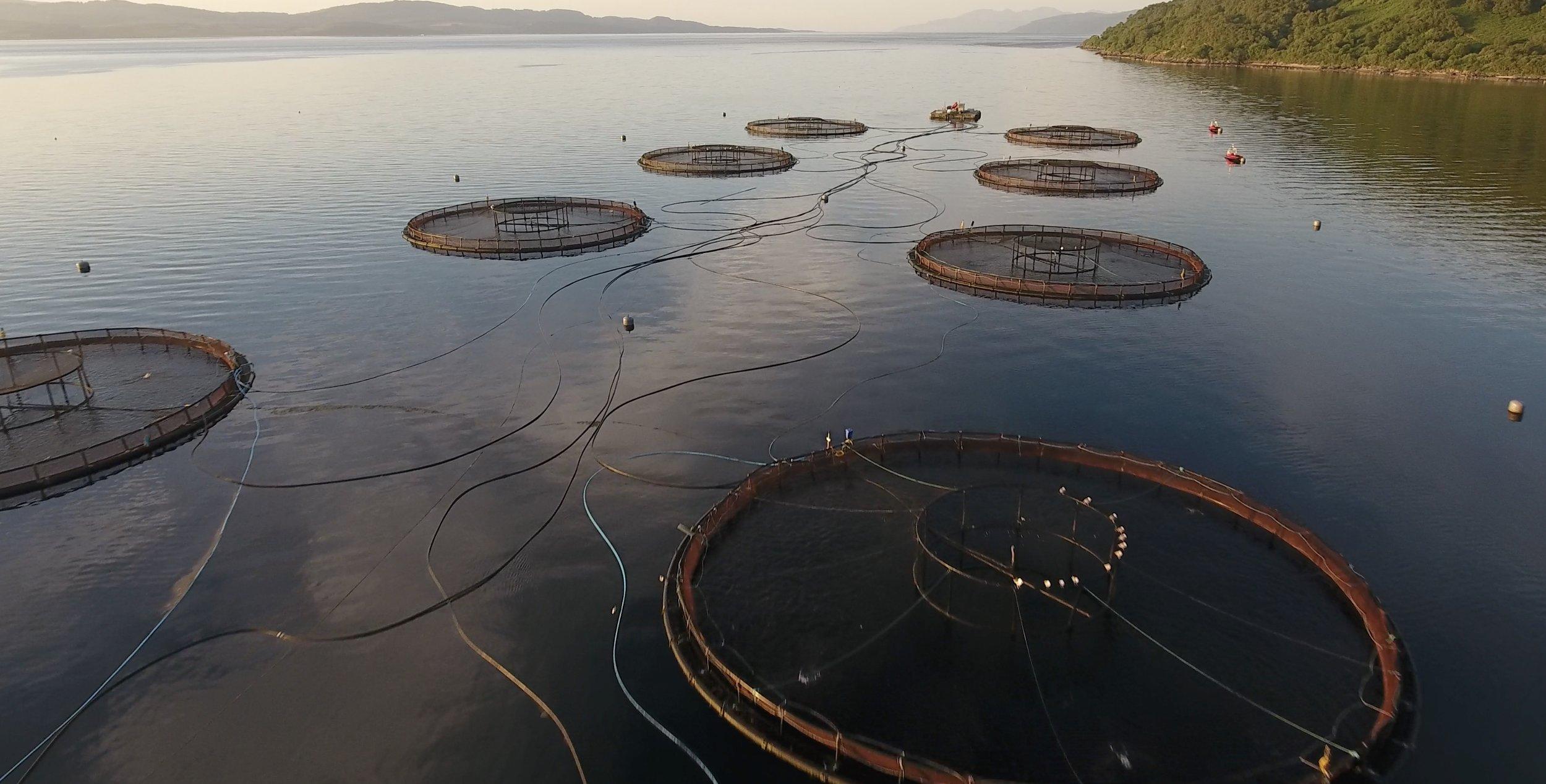 Scottish fish farm