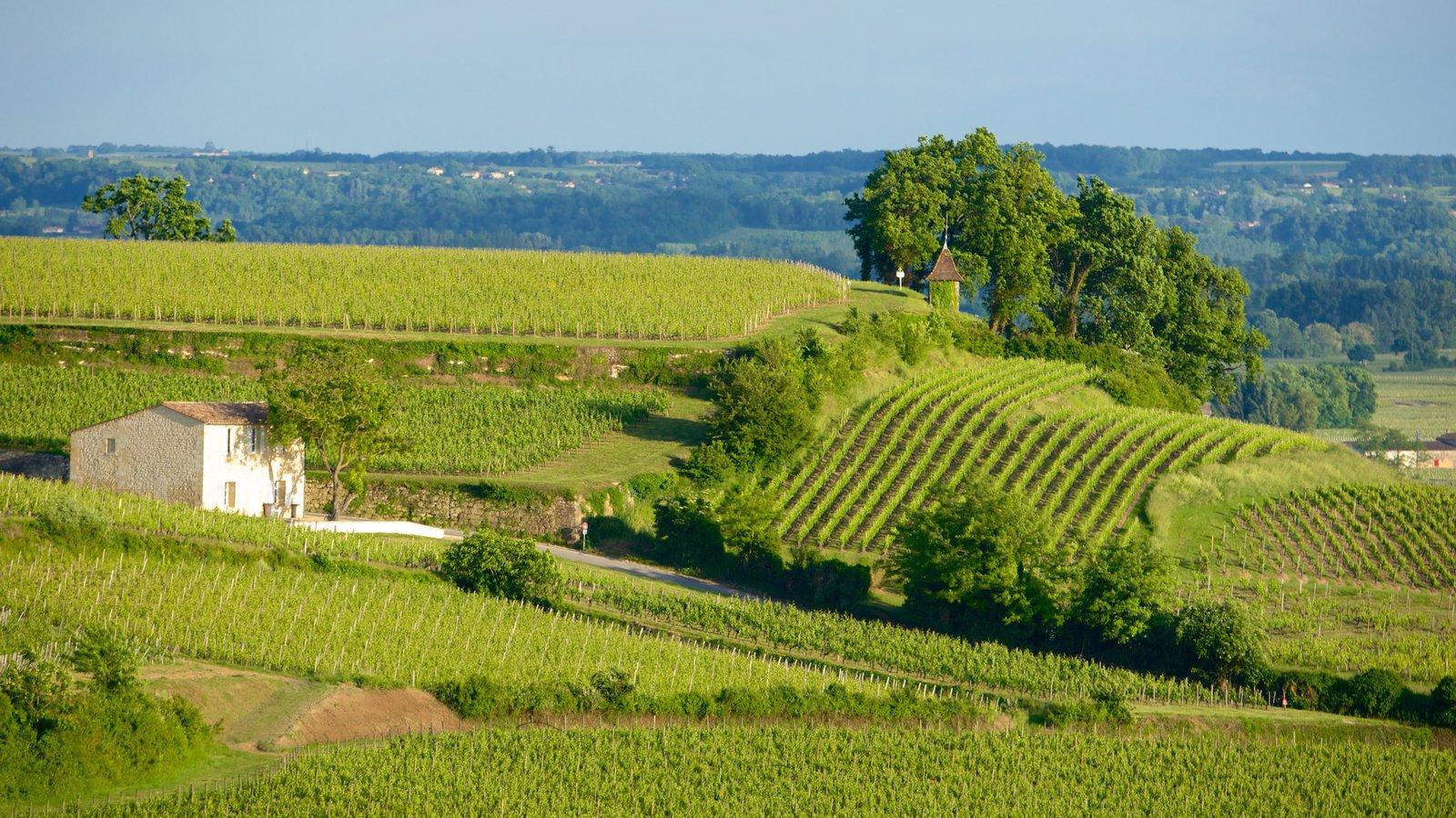 131681-Bordeaux-Wine-Region-Area.jpg
