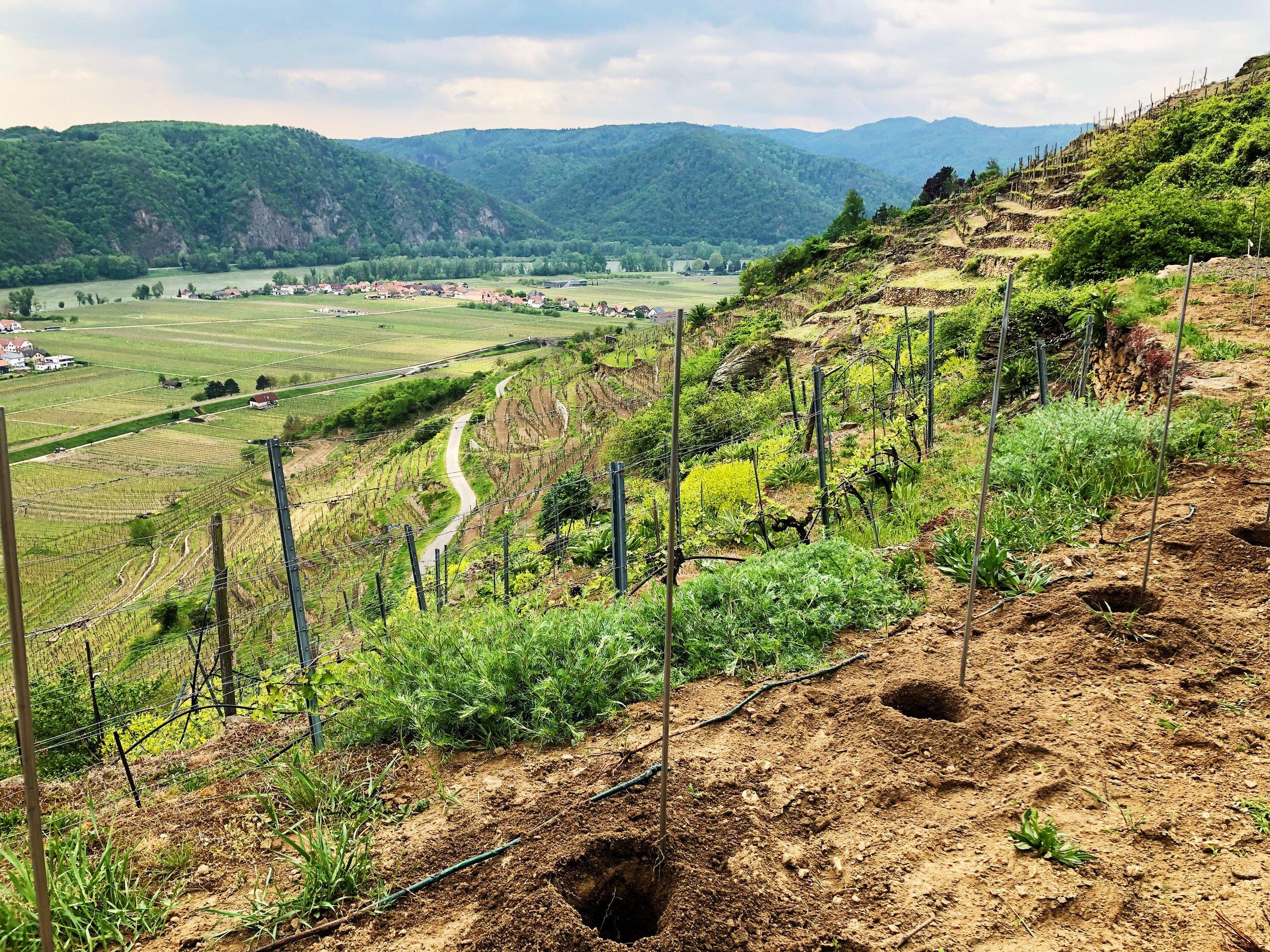 neuer Weingarten 2.jpg
