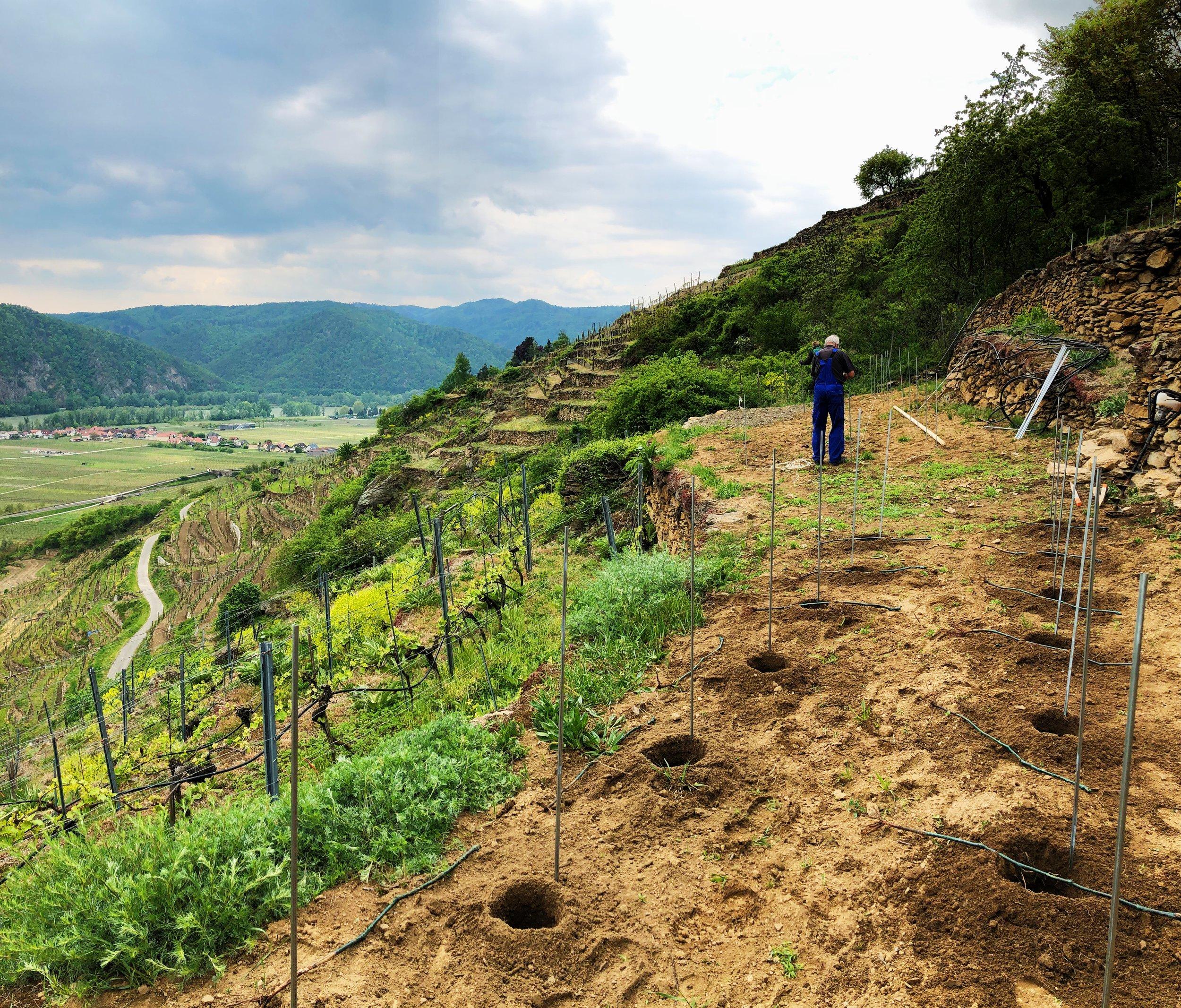 neuer Weingarten 3.jpg