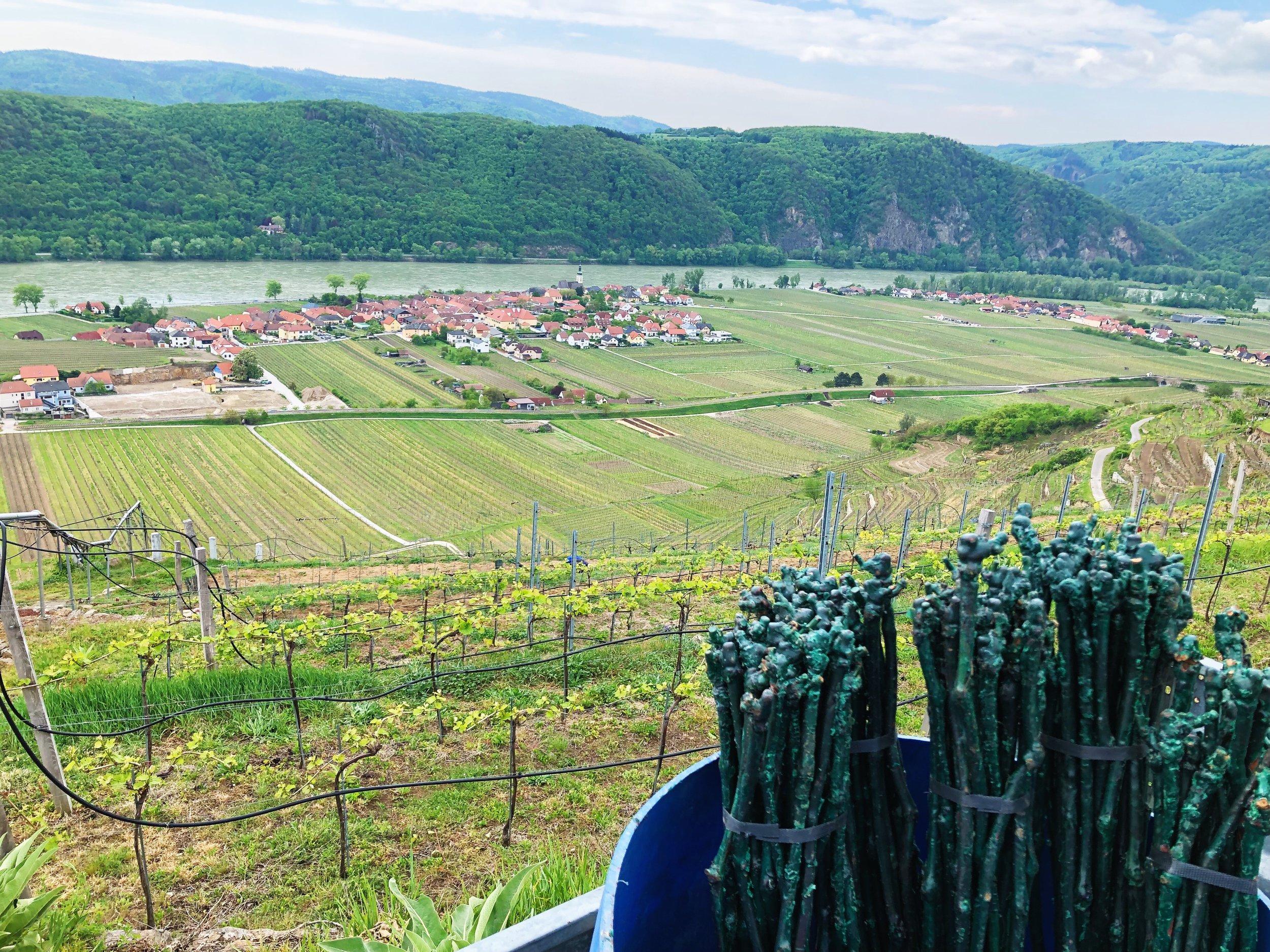 neuer Weingarten 4.jpg