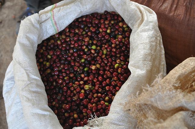 Ethiopia Guji beans