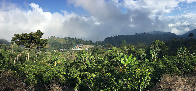 View from El Guayabo, the plot that produced one of the best coffees from Santa Barbara this season