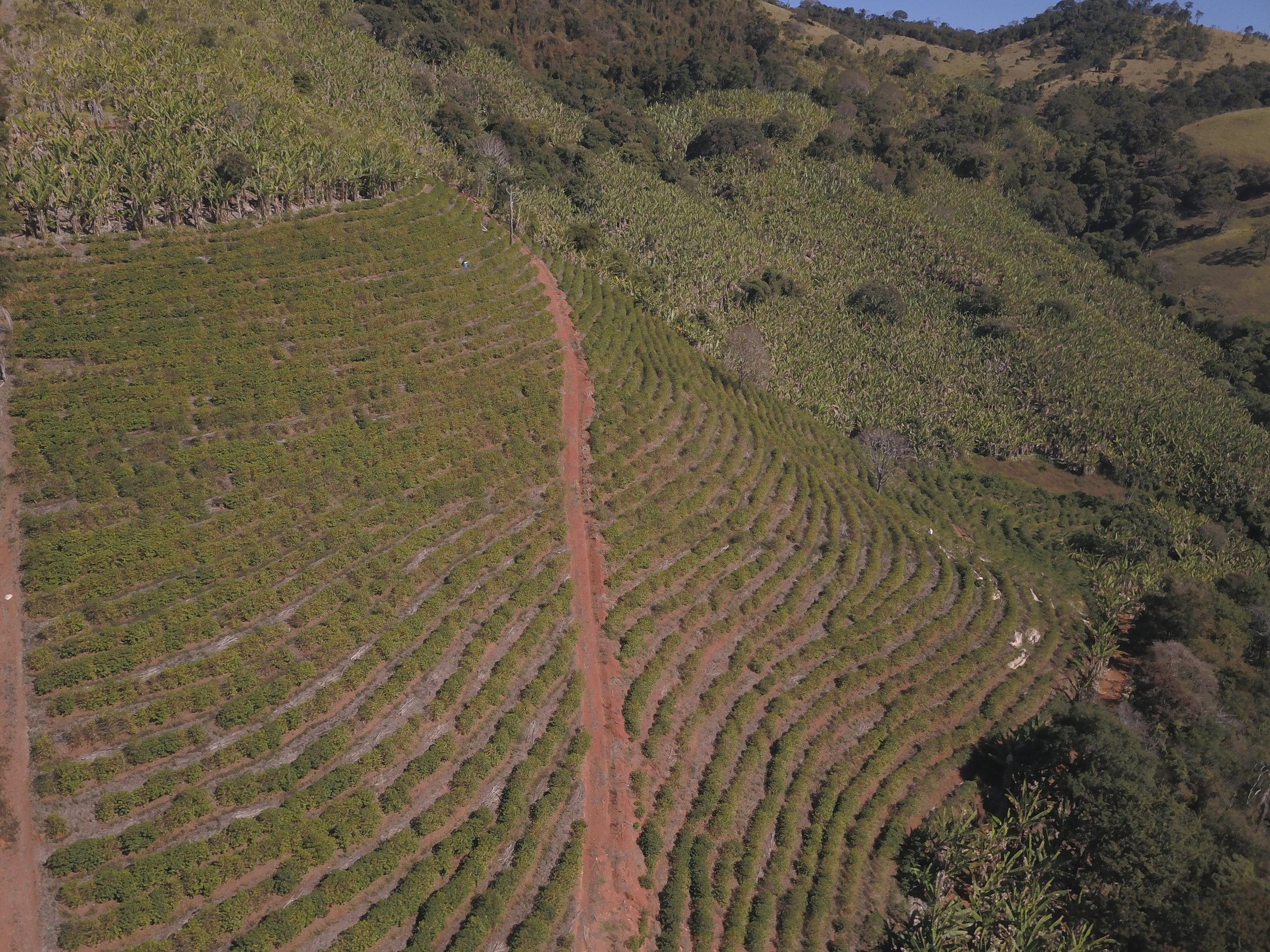 pinheirinho-farm.jpg