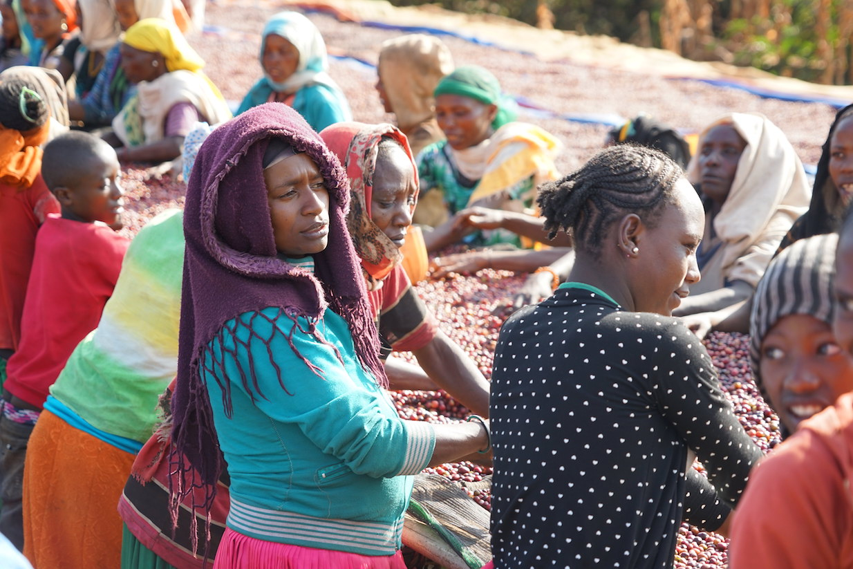 Coffee sorters at Dimtu Washing Station, Hambela,  Buku Hamlet