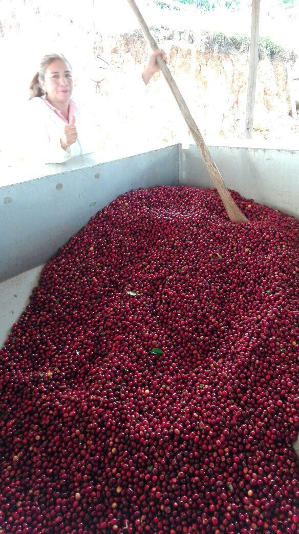 Maria and her family hired a neighbor to teach them how to cultivate coffee.