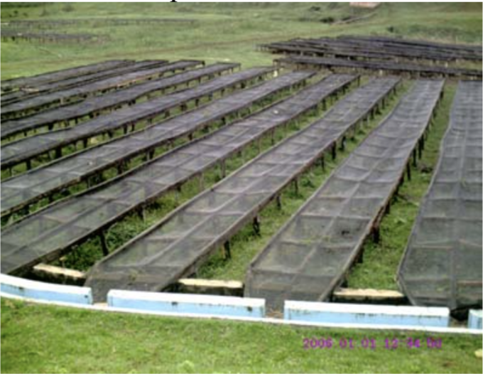 Drying beds, Kiunyu Coffee Factory, Kirinyaga, Kenya
