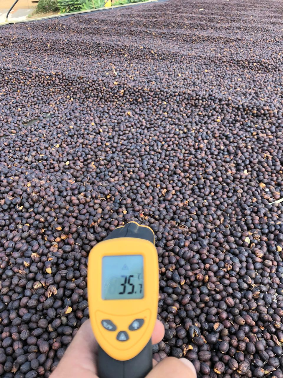 Careful tracking and measurement is key to consistency in production at Carmo Coffees in Carmo de Minas, Brazil.