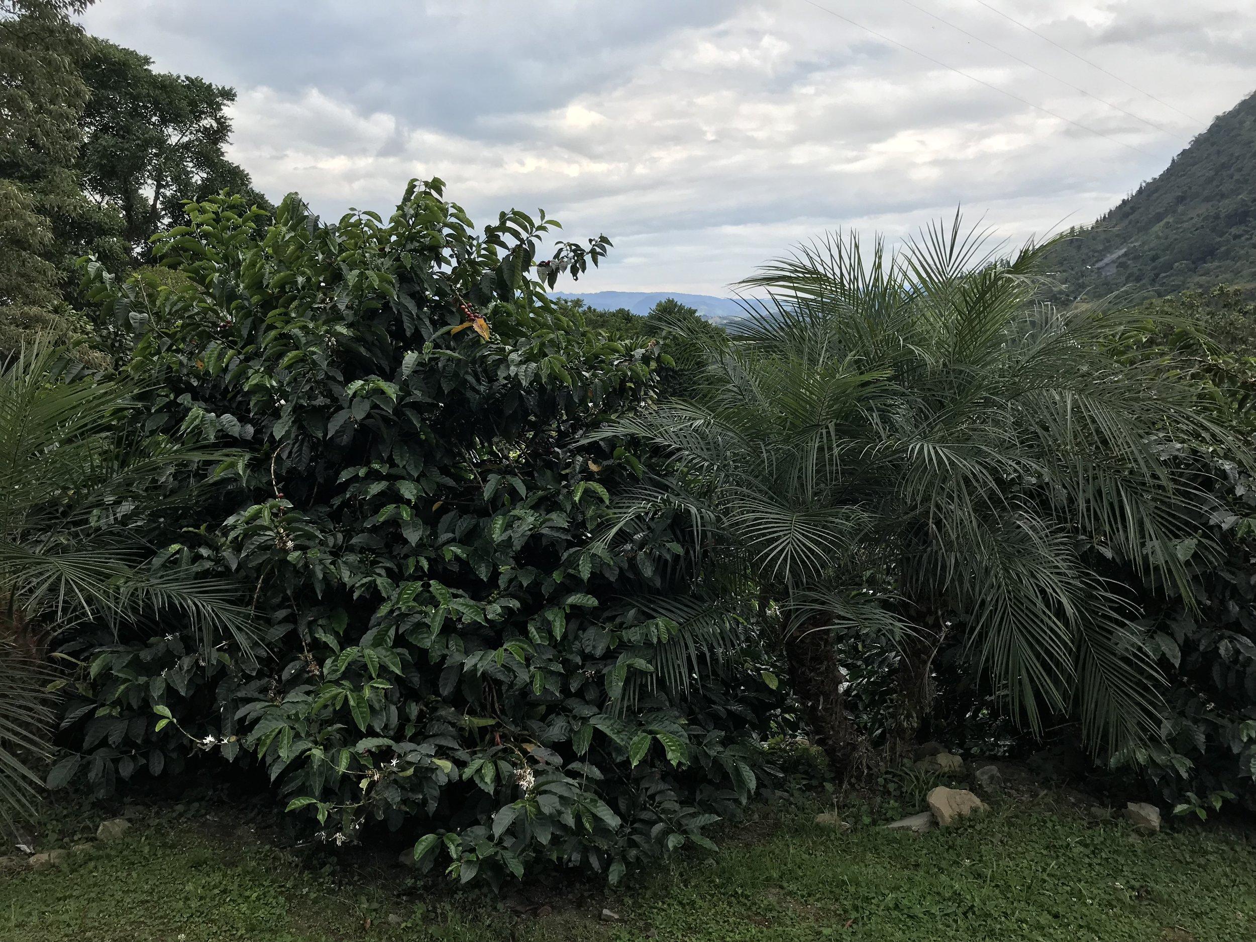 La Palma y El Tucan, Cundinamarca, Colombia