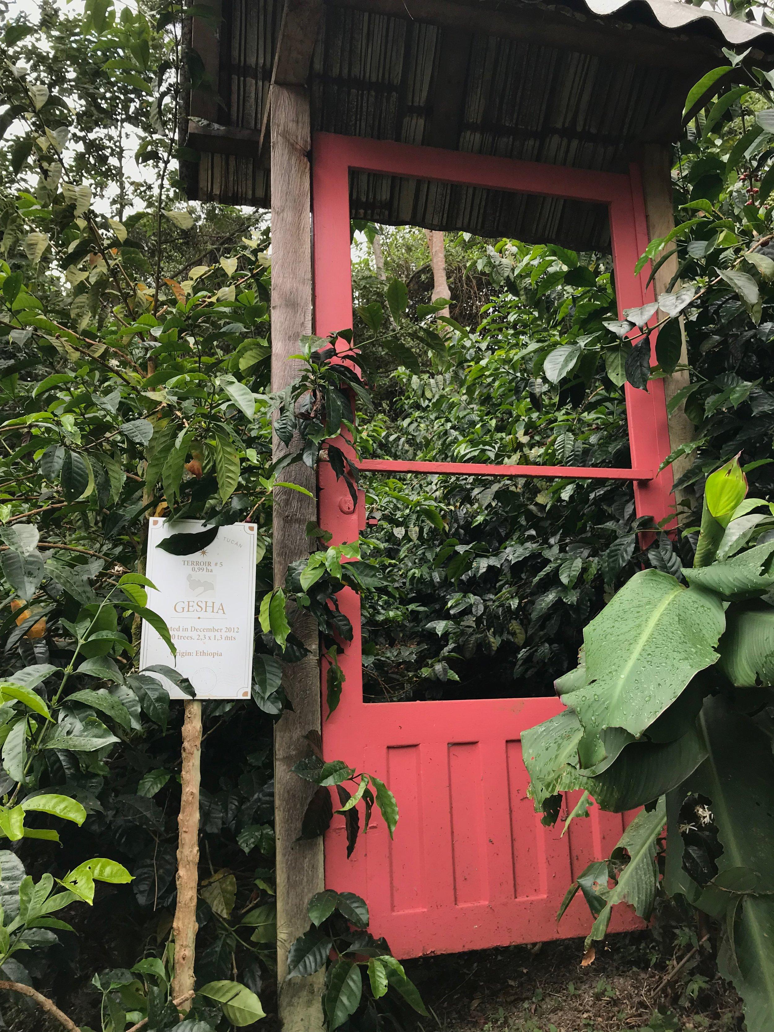 Gateway to Geisha, La Palma y El Tucan