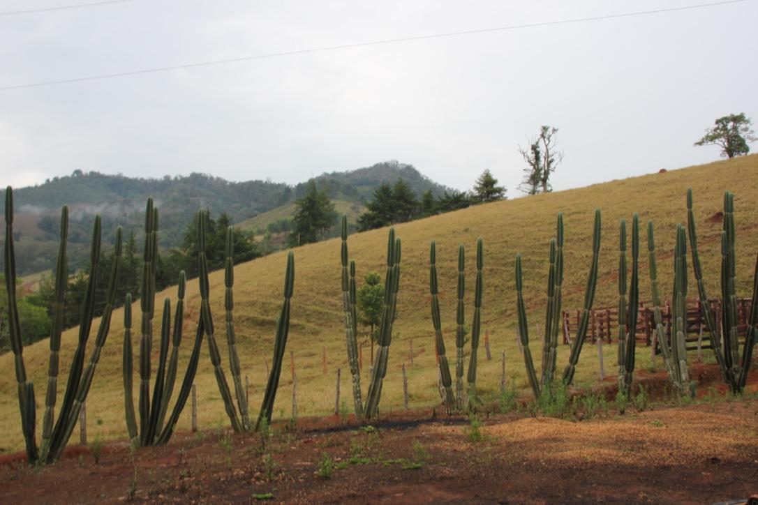 Fazenda Pinheirinho