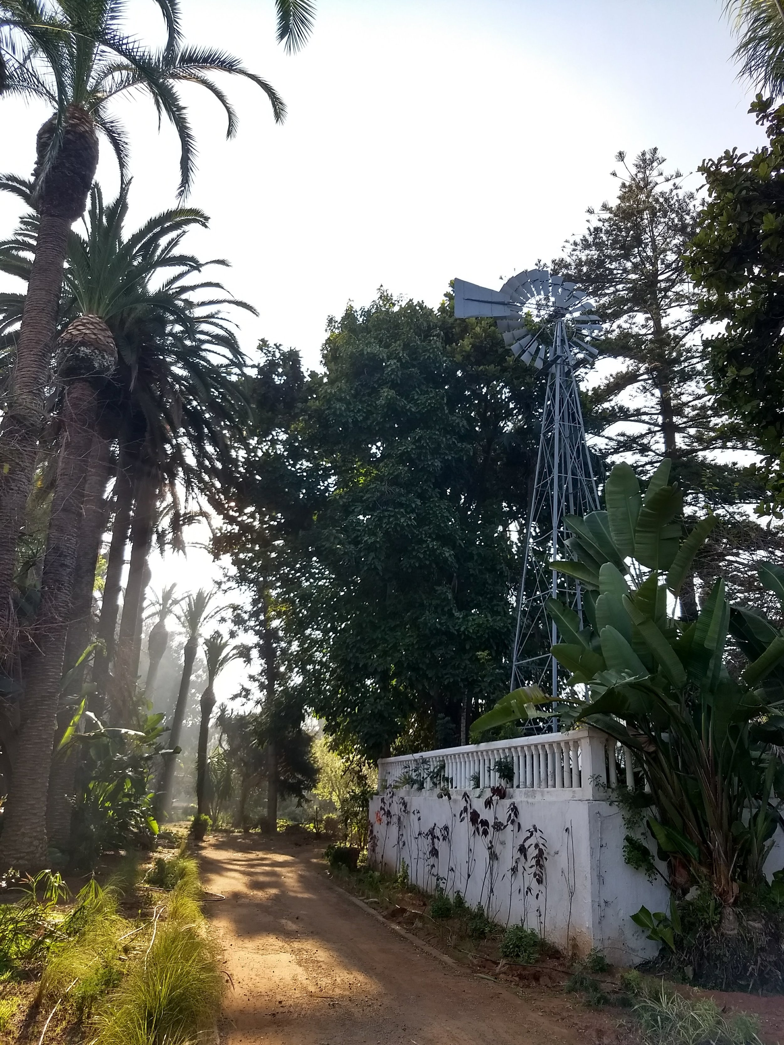 Even in the middle of winter, Rabat was full of green, growing plants. Photo Credit: Liora Silkes, 2018.