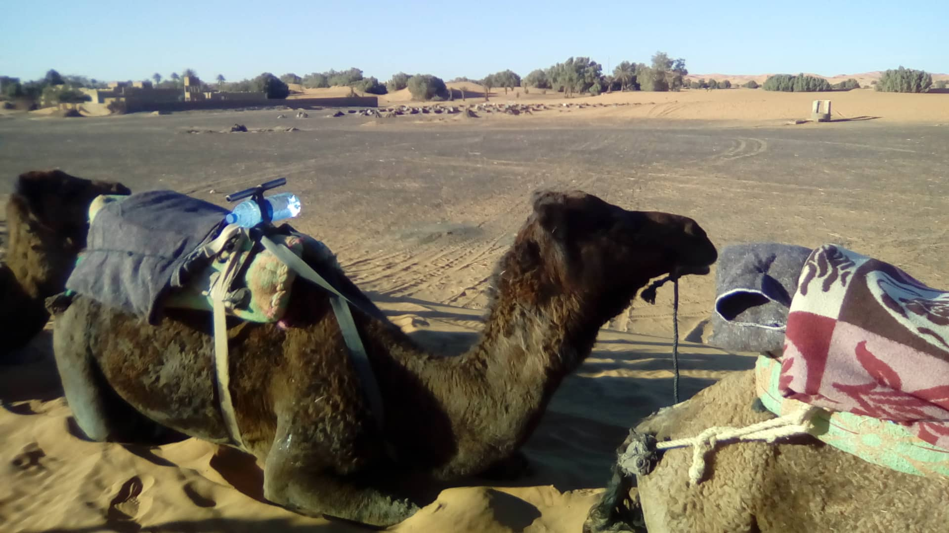 My roommate in the Sahara Desert. Photo Credit: G. Szabo, Fall 2018