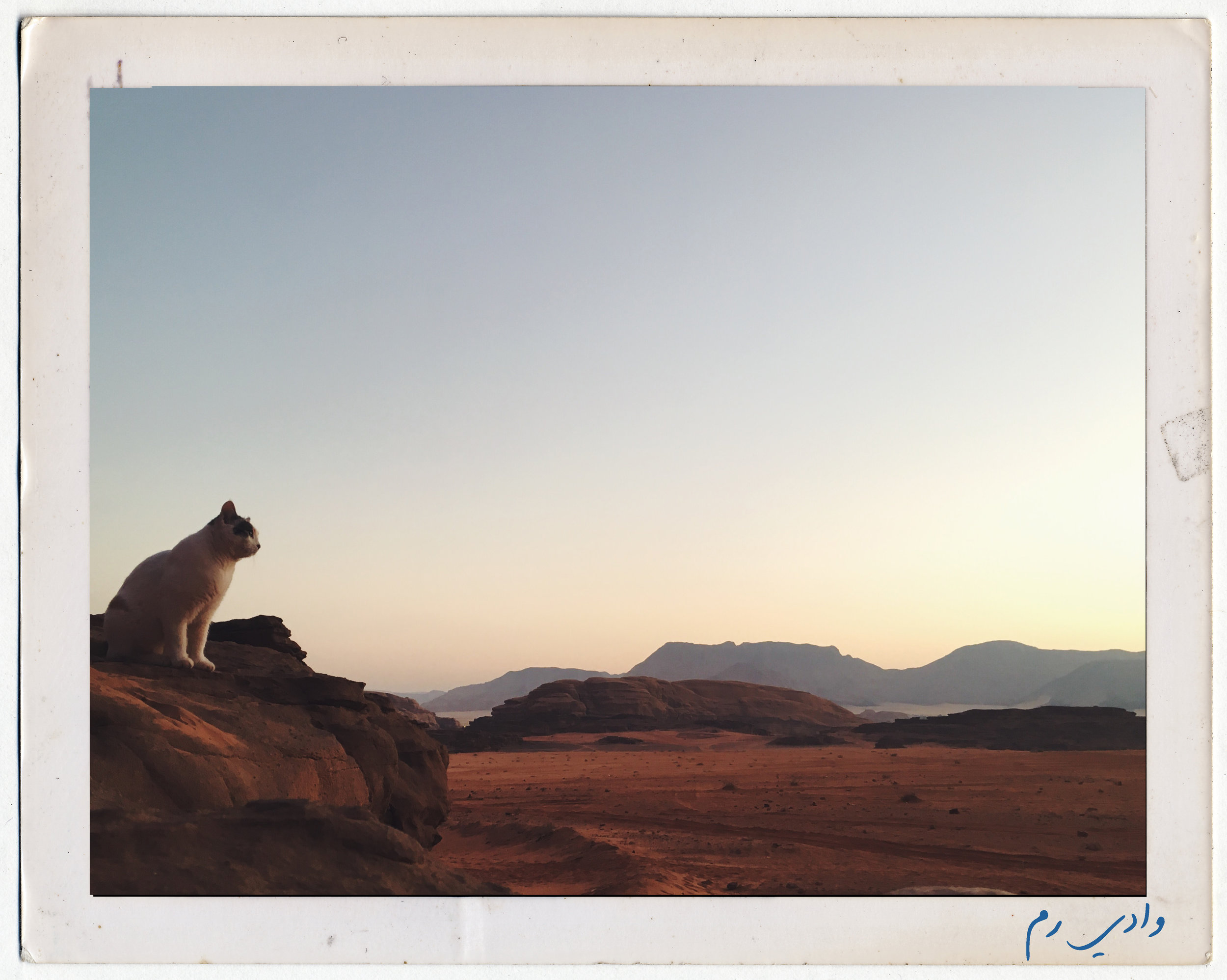 Wadi Rum was a truly otherworldly experience – in every direction you look, there's a stunning Mars-like landscape. No wonder so many movies have been filmed here! We woke up before the sun and made our way to a high point in the desert. We were joined by this cat, who watched the sunrise with us and then proceeded to model in the golden light of early morning. Photo credit: L. McGuire, Fall 2018