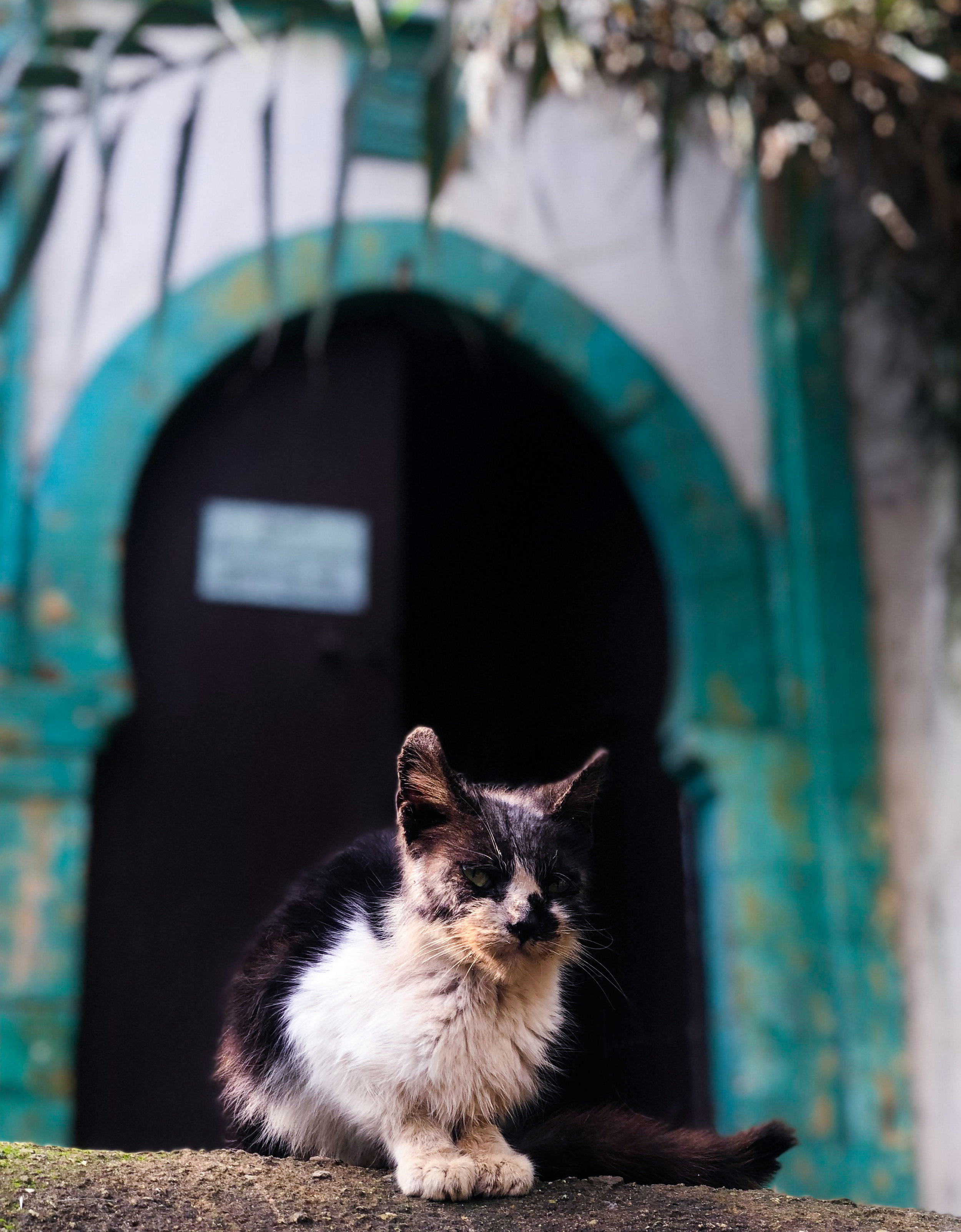 The relationship between Moroccans and cats throughout the city is an interesting one. While some children may shy away, scared of an unfamiliar animal (pets are significantly less common here than in the United States), or some adults may regard them as dirty, they're still widely respected. I've seen many Moroccans set up outdoor shelters, provide food, and sometimes even play with them. Seemingly everywhere in Morocco, street cats are particularly common in the gardens of Chellah, a ruined Islamic necropolis and former Roman colony, which is now a World Heritage site. Chellah also has ancient connections as a Phoenician settlement, all of which makes it one of the most toured attractions of Rabat. Here in this photo, one of the many cats in the garden is perched in front of a blue door. Doors with this distinct keyhole shape are common in classic Islamic architecture, and can be found all across the city. Photo Credit: J. Miller, Fall 2018