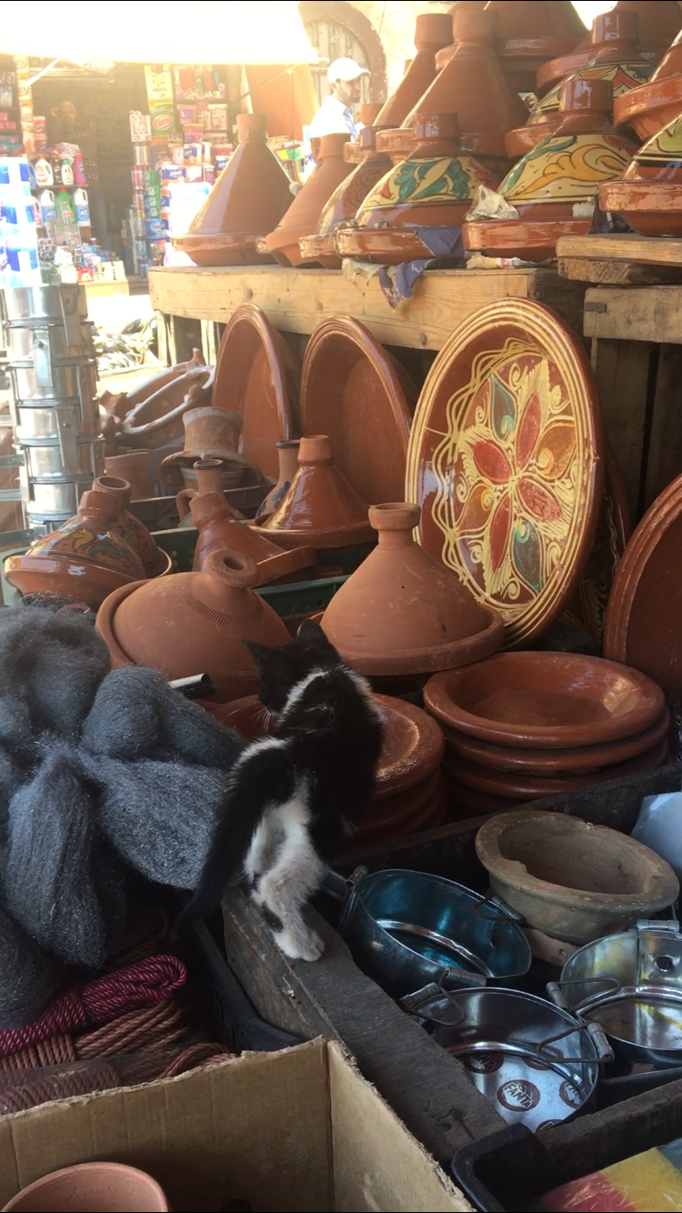 In a busy market, a kitten, after purring around my feet for several minutes, makes its way to a tagine dish. If you aren't yet in love with these cats, let this kitten sneaking into a tagine plate melt your cold heart. Photo credit: Fisher, 2019