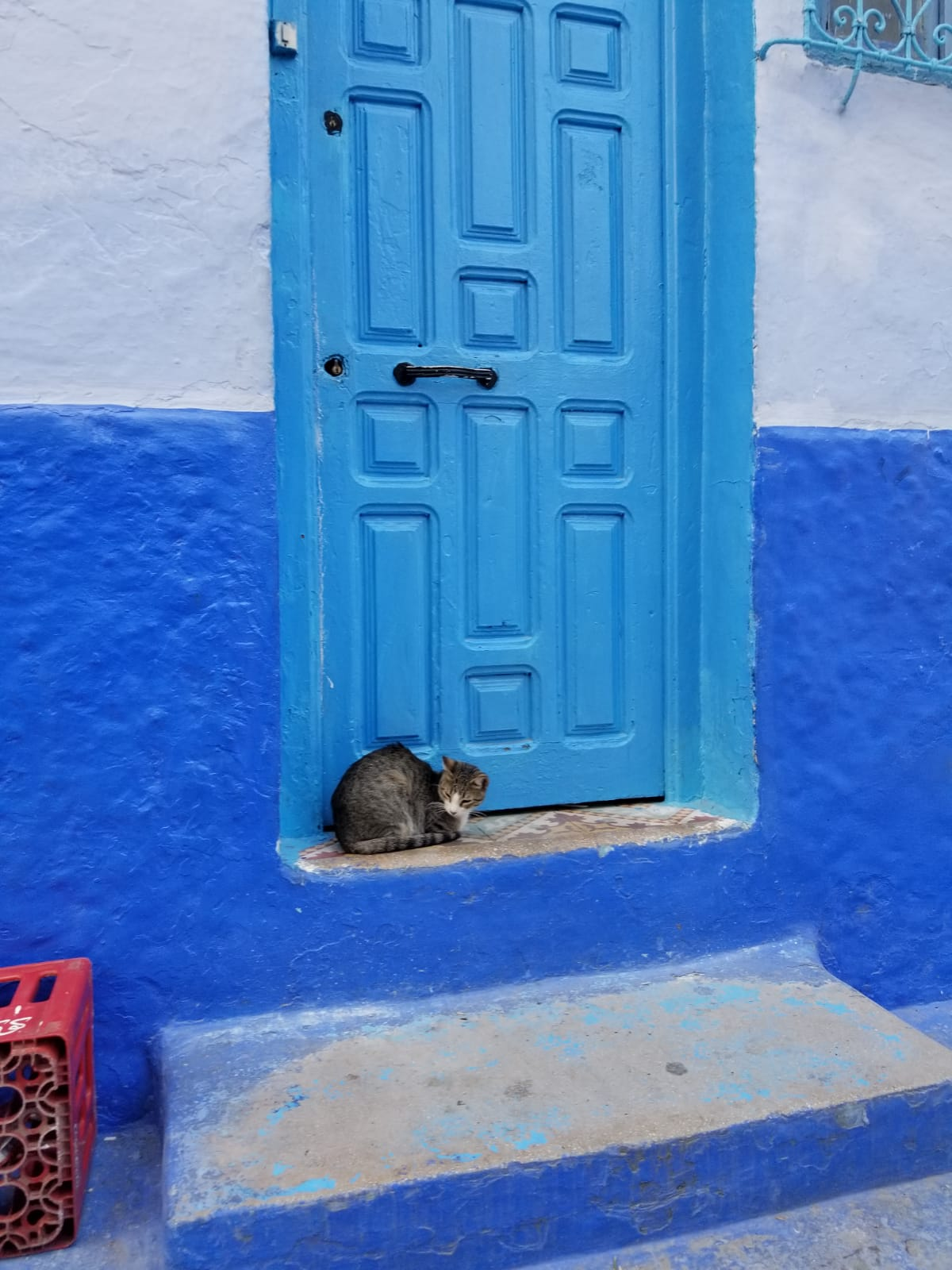There are literally hundreds of cat pictures in Morocco starring kitties and doors… There isn't a 'but' here, they're literally all amazing and I couldn't begin to pick which ones were better than others. What does Morocco have to offer? Cats and doors!! Photo credit: Fisher, 2019