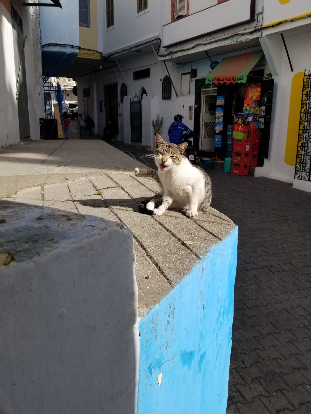 This particular kitty was LESS than happy with the attention we weren't giving him. In Assilah, stopping to admire the surroundings, the crying of an ally cat demanded our attention AND our photographing skills. He's telling you to come to Morocco! He wants scratches! Photo credit: Fisher, 2019