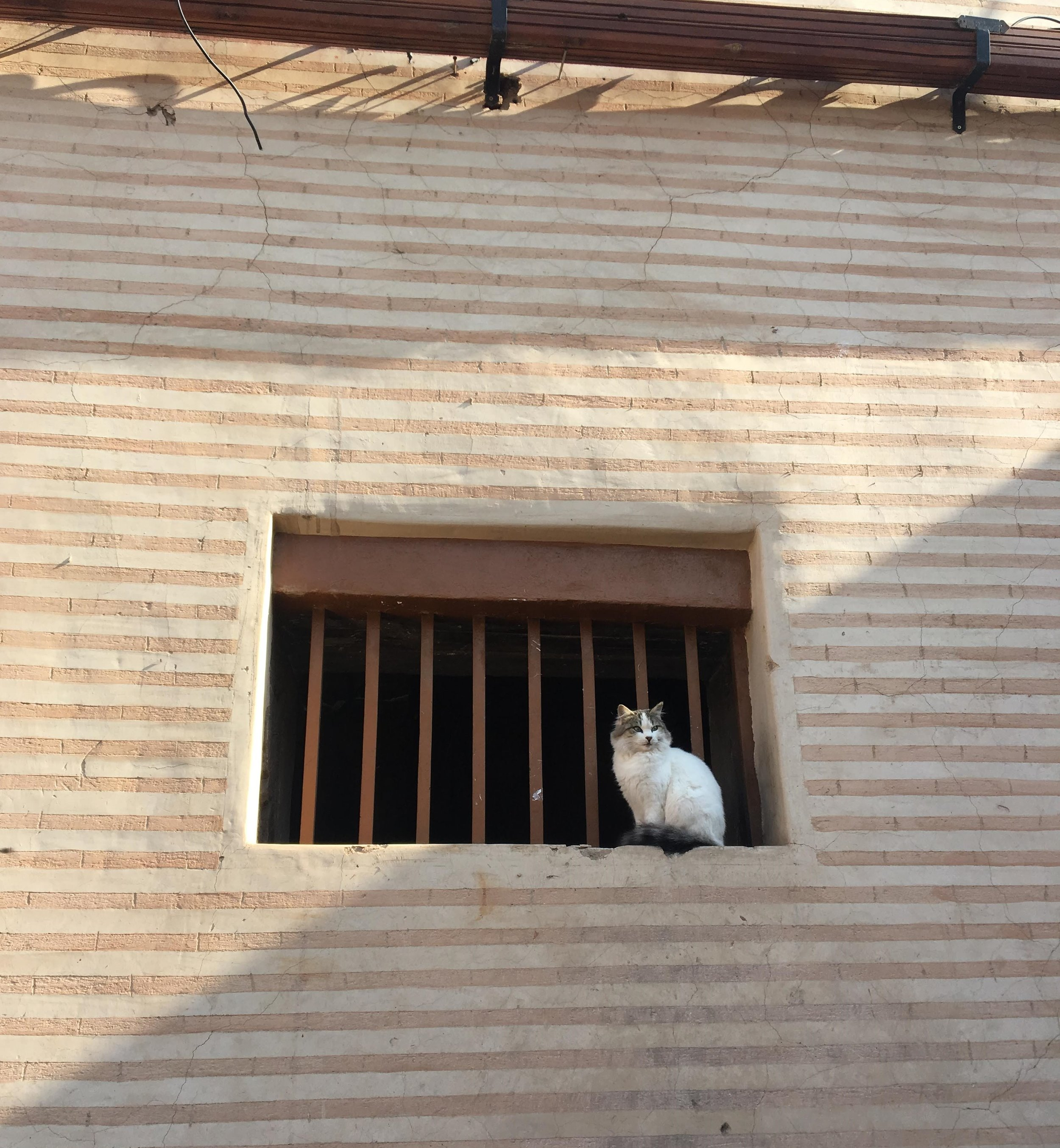 Surveying the crowded streets of Agadir, this queen cat reigns over her kingdom. Too far away to give proper attention, she watches us act as her paparazzi, and we are happy to comply. Photo credit: Fisher, 2019