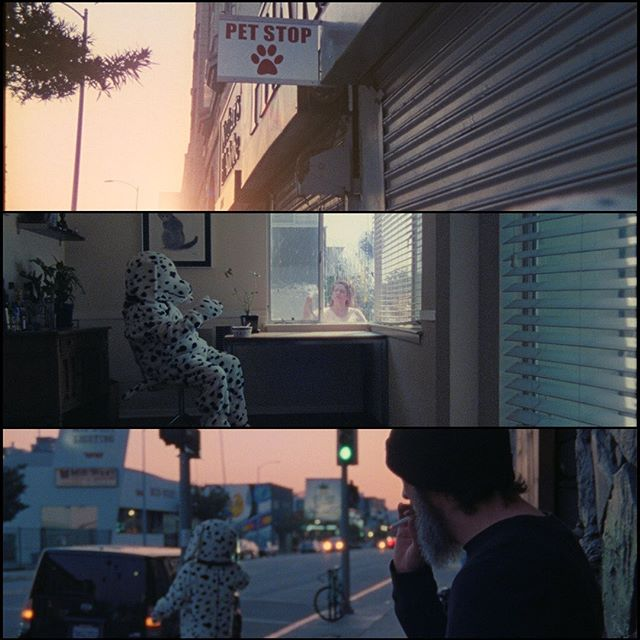 "@chapisdude quirky music video ""The First Day"" 🐶 #shotonfilm  Director @locanilla   DP @hass_avocado   Edit @ethanbleach  "
