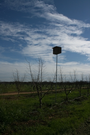 A new owl box sitting above one of our young orchards makes a perfect home and hunting perch.