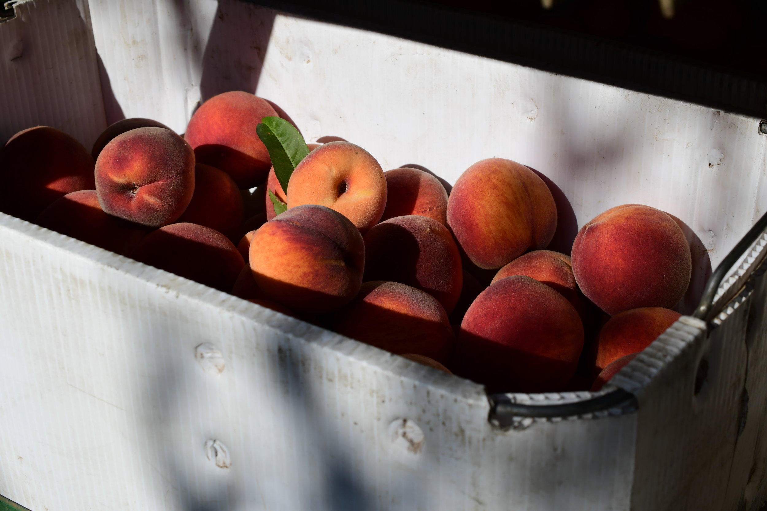Cal Red Peaches.JPG