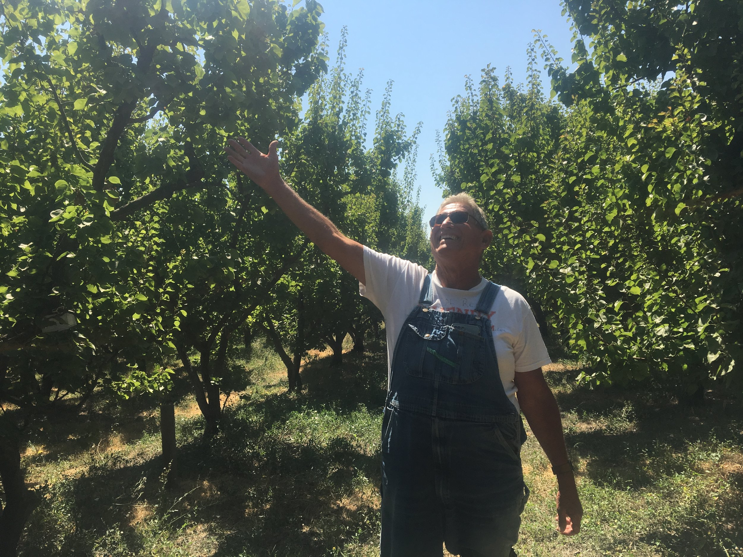al apricot growth.JPG