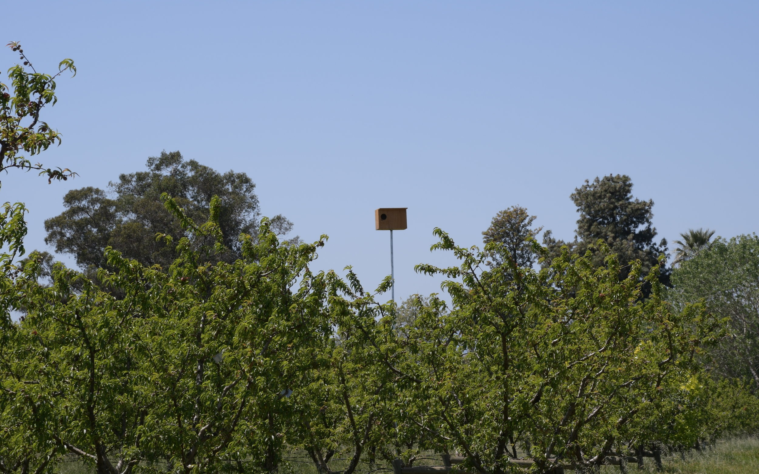 Owl Box in the summer