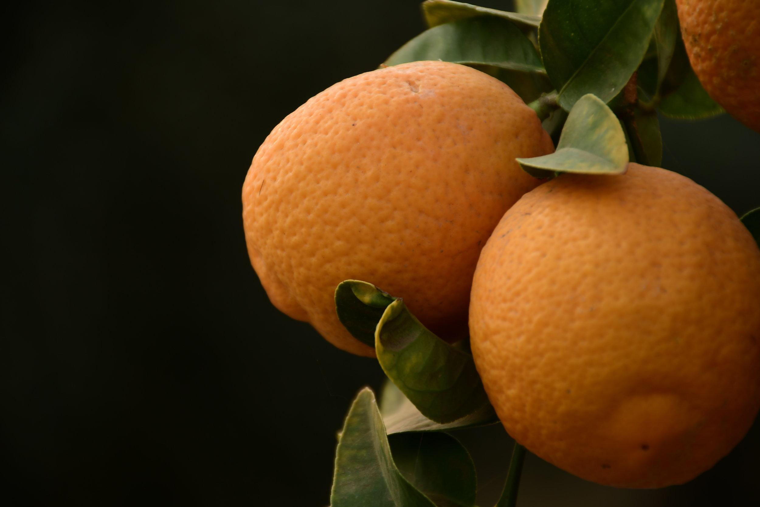 Citrus ripening.JPG