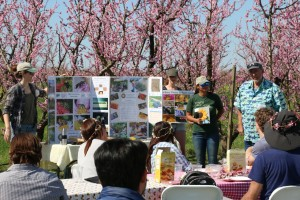 Bee talk with Gorden Frankie of Cal's Urban Bee lab in the orchard at Frog Hollow Farm