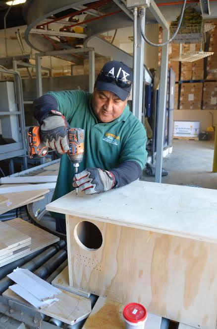 Abel building owl boxes