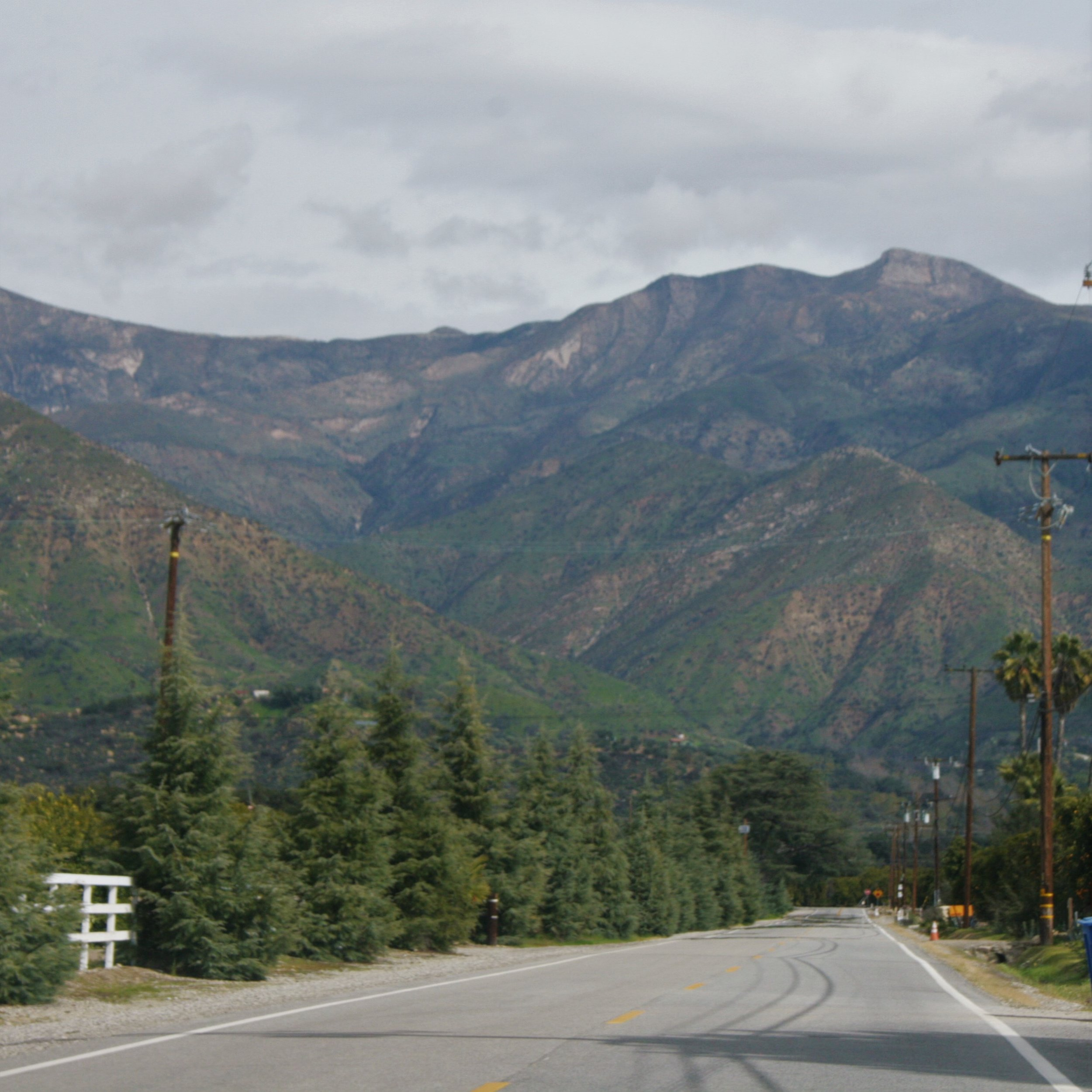 Driving through the famous citrus orchards of Ojai towards the Topa Topa Mountains.
