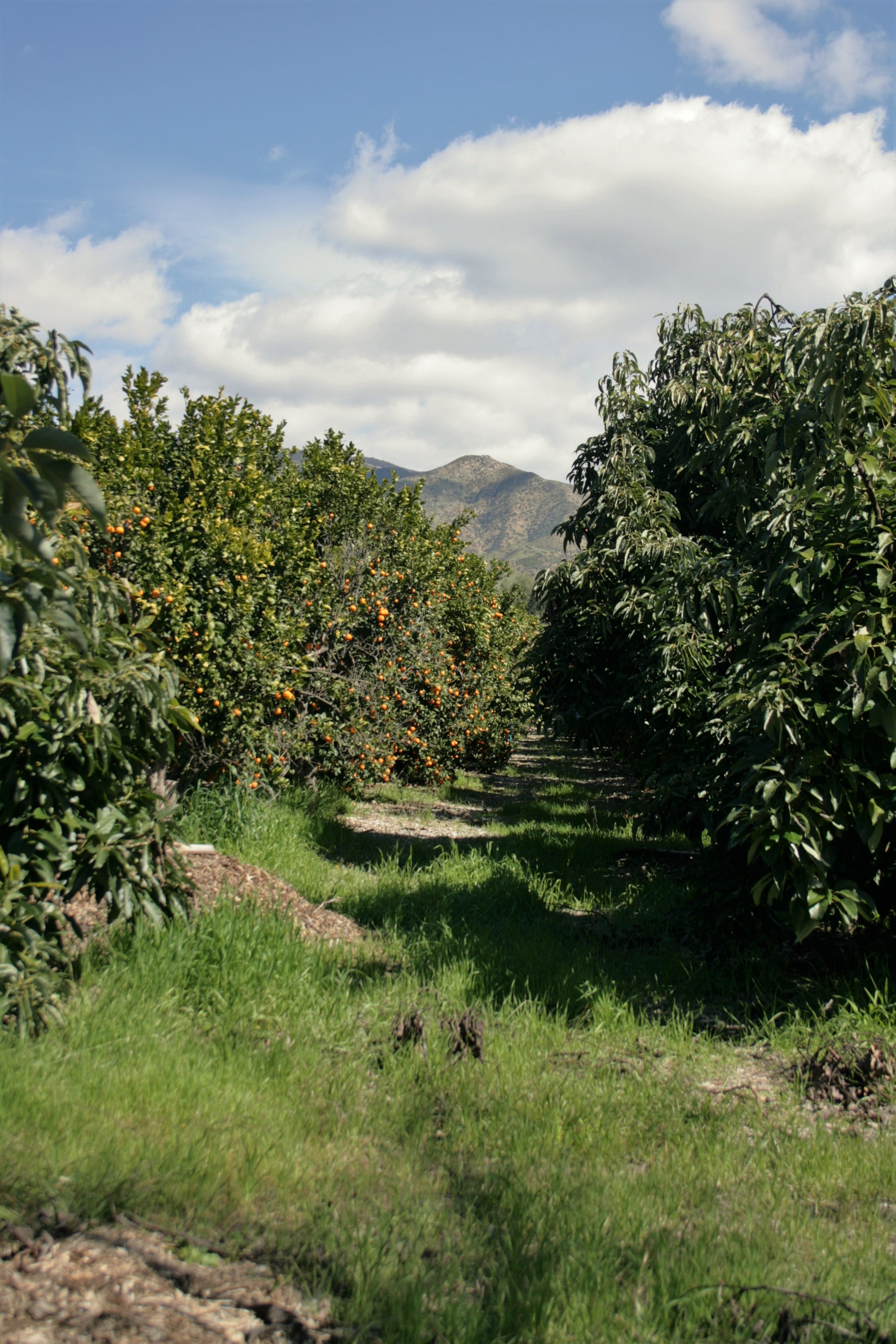 Citrus & Avocado.jpg