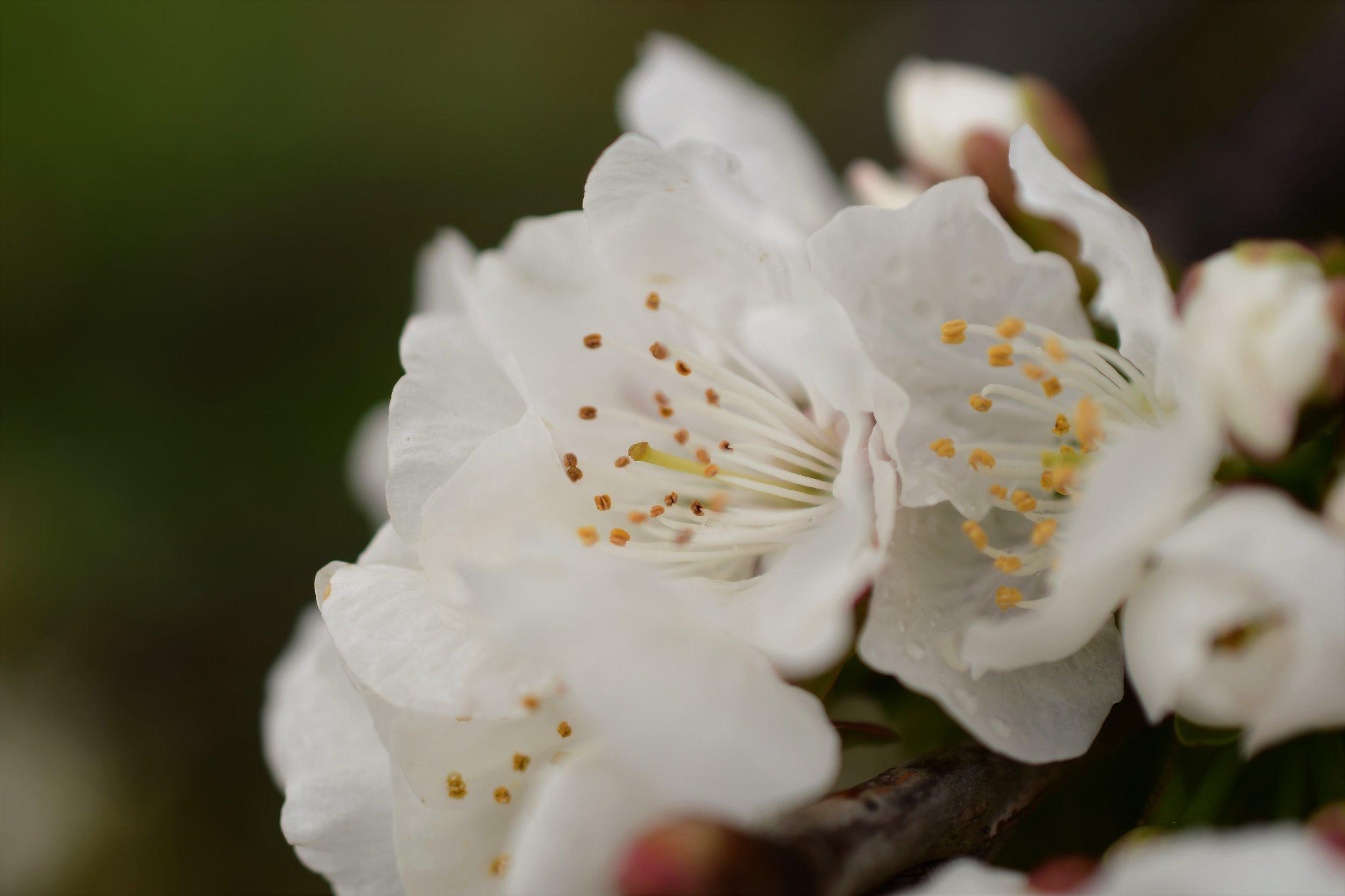 Blossom parts.jpg