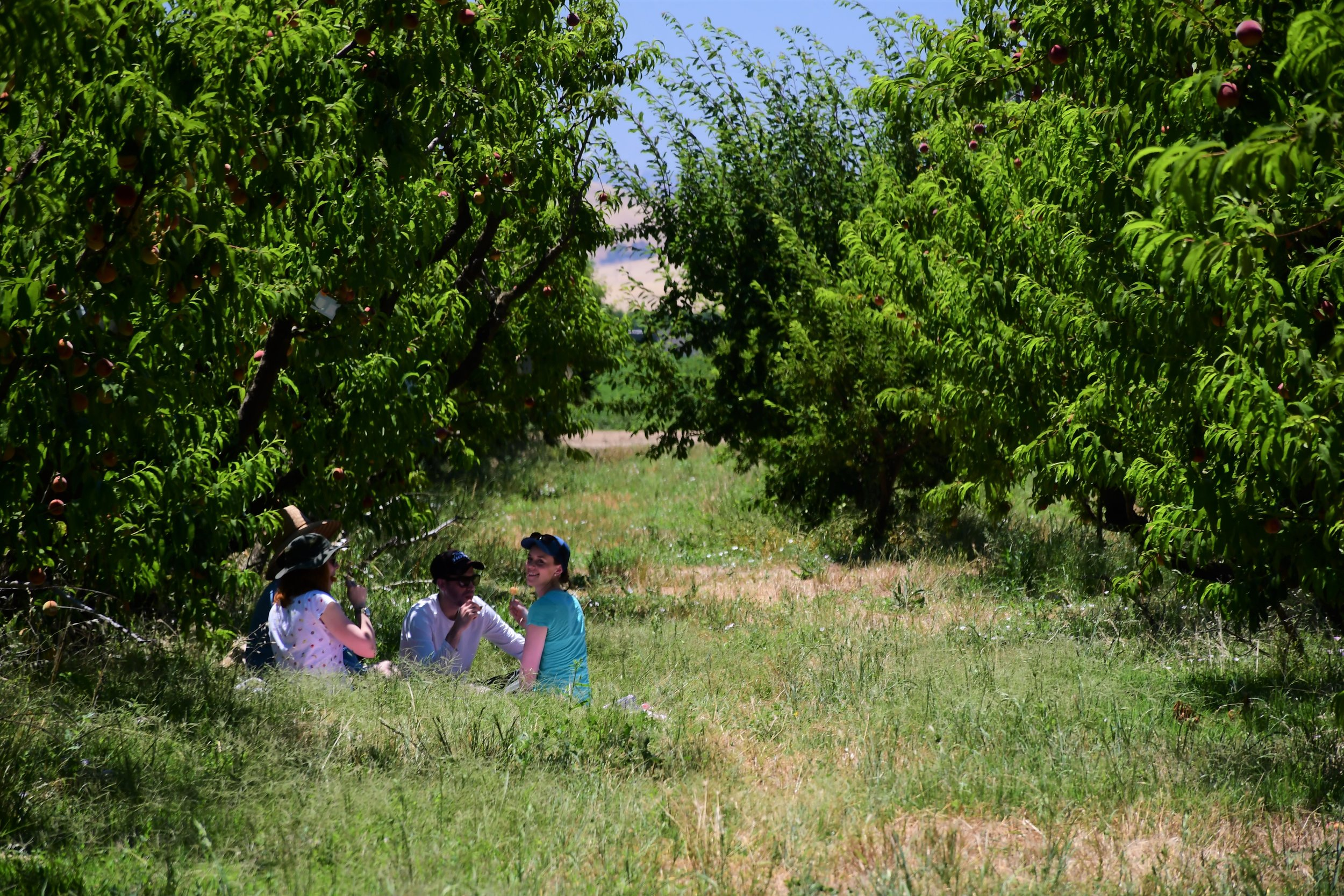 Enjoying popsicles in the orchard