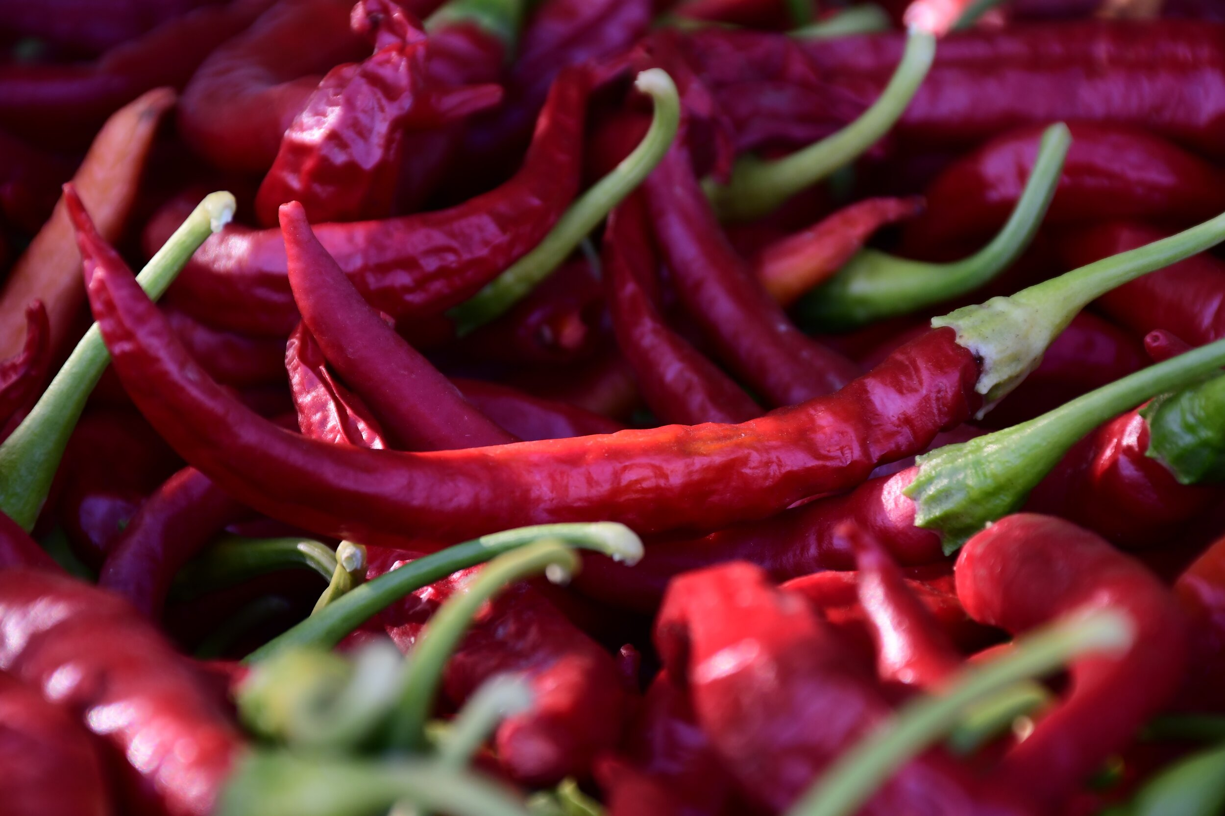 Chiles harvested for drying.