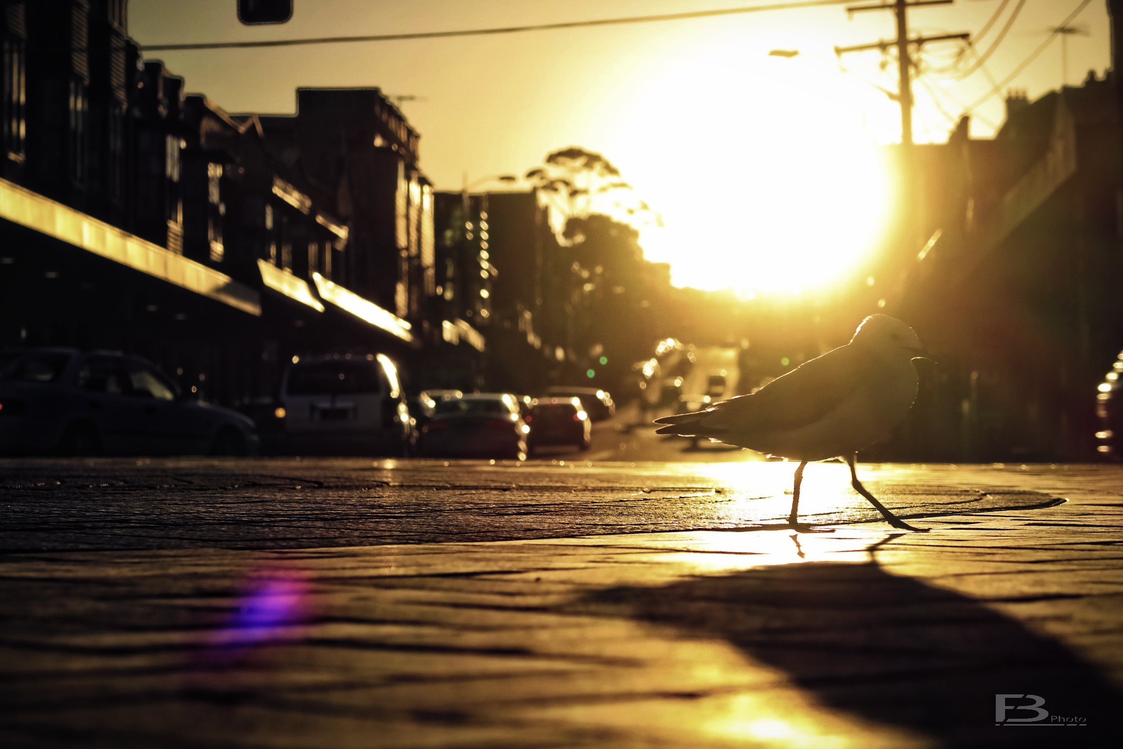 Sydney_2017_B012_27.jpg
