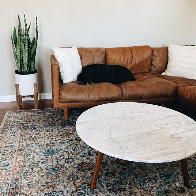 We're slowly but surely making this house a home here in San Diego; a home that we can't wait to host in! We absolutely adore our new marble coffee table that compliments our couch, both from @article ! // It's been a whirlwind of a holiday week including unpacking a sea of boxes, late nights, dealing with a stiff neck/back and a sick pup (Sadie gorl is all better now!) But on the plus side: we live two blocks away from a plant nursery and a coffee + flowers shop 🎍☕️💐💸 #dangerous !!! Ok ready for visitors now! #ourarticle #nirvanasofa #maratable #ourhome #sandiego #mallorymccamyart #interiordecorating #dsliving #happyweekend #happyspace #nesting #homedecor #livingroom #lessismore #sadiegorl