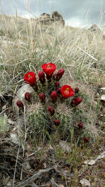 desert-flowers-best-crested-butte-colorado-realtor.jpg