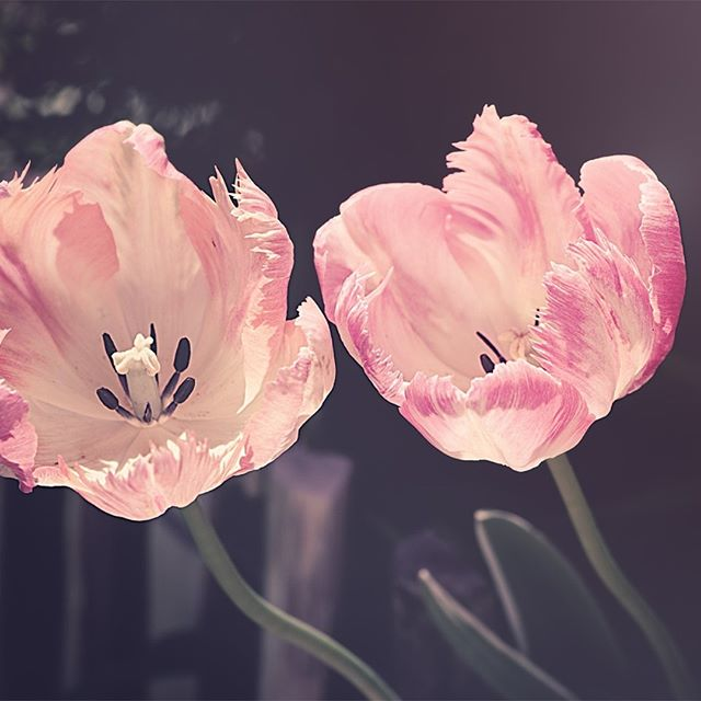 Happy first day of Spring ! #beinspiredbynature #springisintheair #spring2019 #colorinspo #march20  #njmom #floridadesign #springflowers #designinspiration #happywednesday #homegoals  #sunnydays #spring #pinkflowers  #beinspired