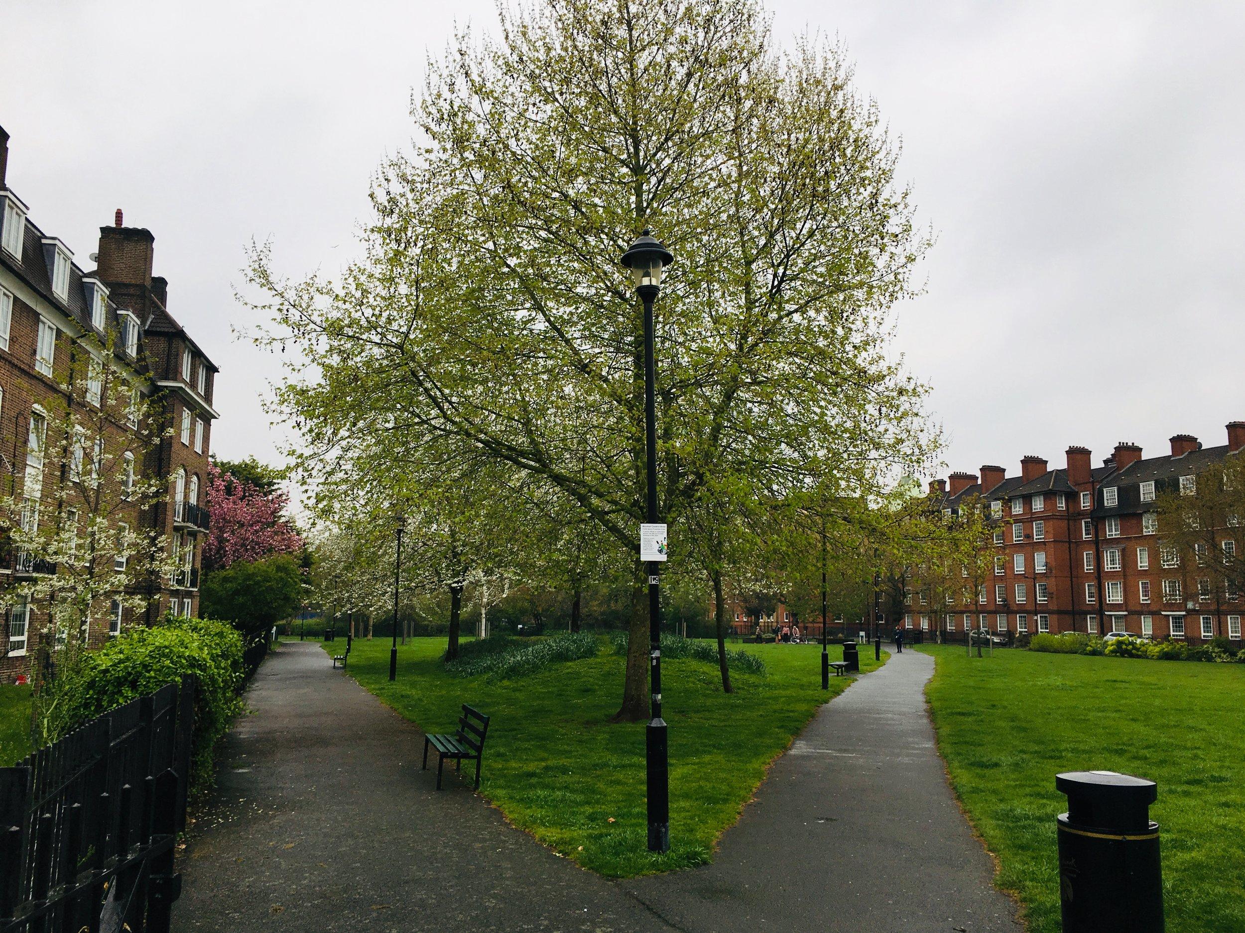Парк между колледжем и общежитием