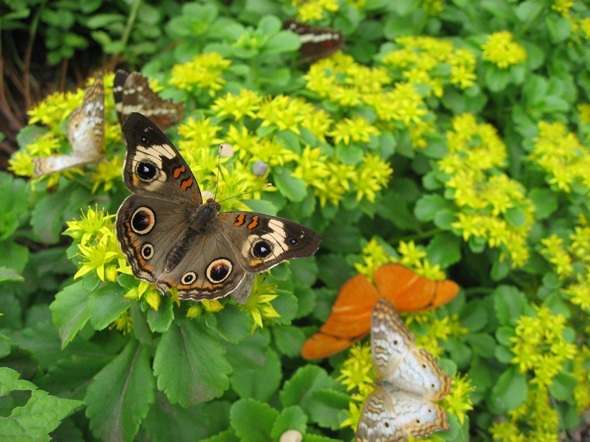Butterfly House & Garden