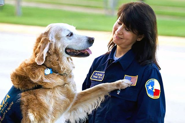On this day we honor and remember the incredible heroes of 9/11 for their service in the face of terror. Among them were Bretagne and her handler, Denise Corliss, who were first responders in the search and comfort of survivors. 🇺🇲🇺🇲🇺🇲 Bretagne passed away in 2016 as the last known surviving 9/11 rescue dog. May you rest in peace, fur friend. Never forget. 🇺🇲🇺🇲🇺🇲 PC: Denise Corliss #911 #neverforget #neversurrender #september11 #manhattan #nyc #newyork #wtc #twintowers #worldtradecenter #fema #texastaskforce1
